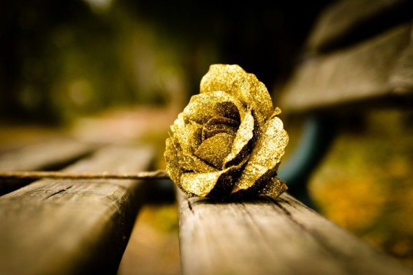Rosa dorada sobre un banco
