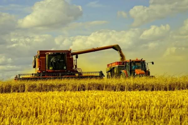 Tiempo para la cosecha de trigo