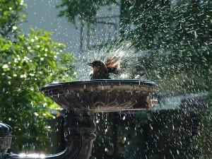 Postal: Pajarito jugando con el agua de una fuente