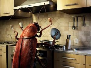Insecto cocinando