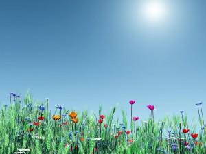 Postal: Flores de la primavera acariciadas por el sol