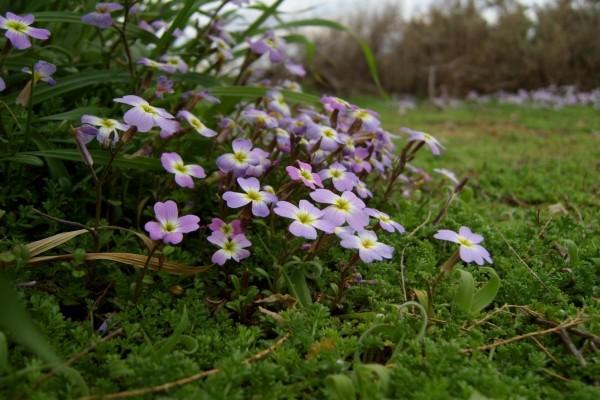 Flores después del invierno