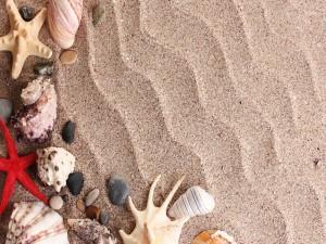 Estrellas de mar, caracolas y piedras agrupadas sobre la arena