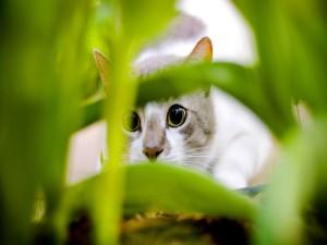 Un gato escondido entre las plantas