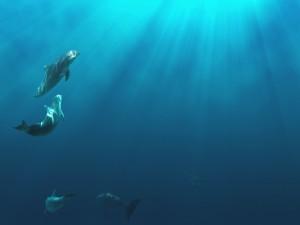 Postal: Delfines nadando bajo el mar