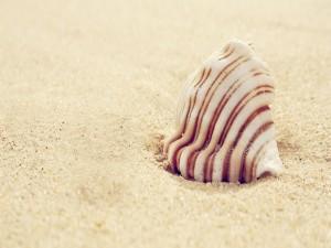 Una hermosa caracola sobre la arena