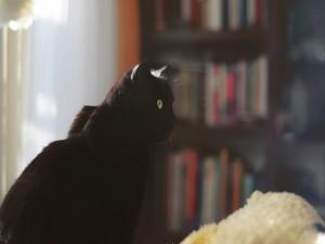 Gato negro en una habitación