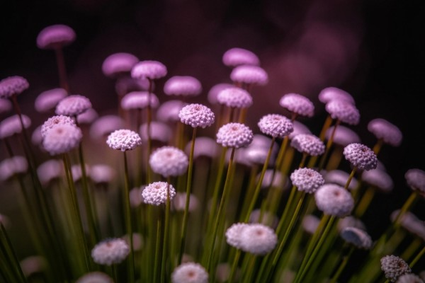 Bonitas flores silvestres de color púrpura