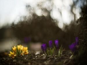 Postal: Flores púrpura y amarillas