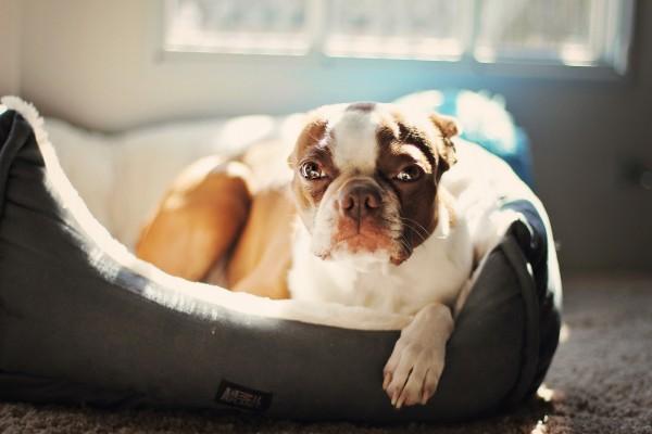 Un perro descansando sobre su cama