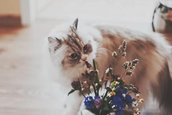 Gato junto a un jarrón con flores silvestres