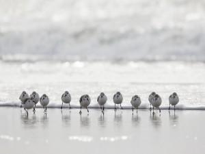 Pájaros en la orilla del mar