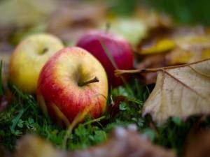 Postal: Manzanas sobre la hierba en otoño