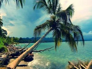 Postal: Troncos y palmeras en la arena de una playa