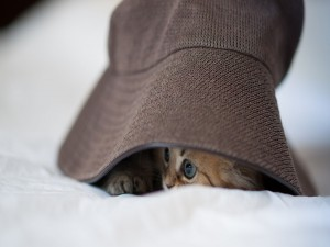 Gato bajo un sombrero