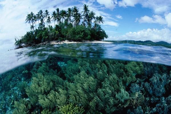 Vegetación bajo el mar
