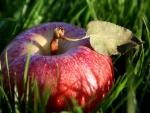 Manzana roja sobre la hierba