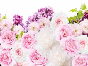 Postal: Hermosas flores