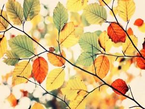 Postal: Hojas de colores al comienzo del otoño