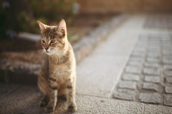 Gato en una acera