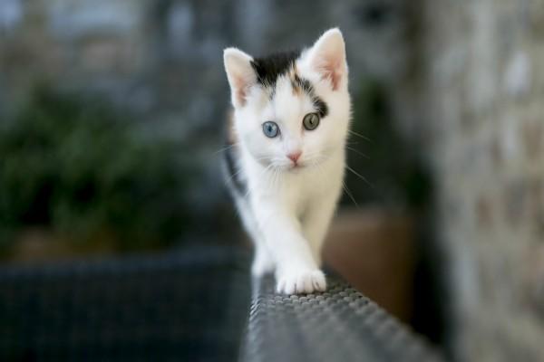 Gatito caminando sobre una baranda