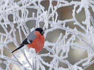 Postal: Pájaro posado en unas ramas heladas