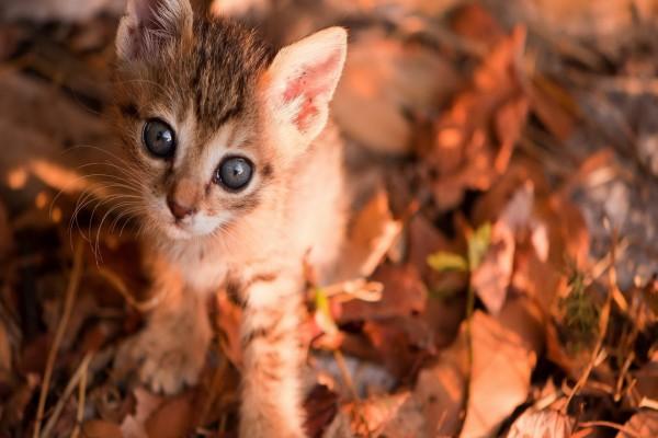 Gatito entre hojas otoñales