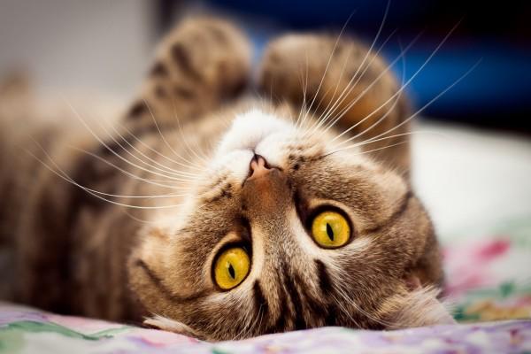Los ojos naranjas de un gato
