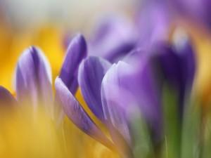 Postal: Flores violeta