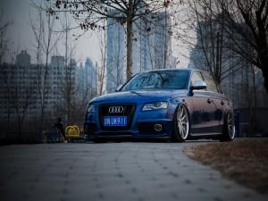 Audi A6 en un parque