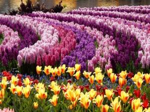 Parque con tulipanes y jacintos