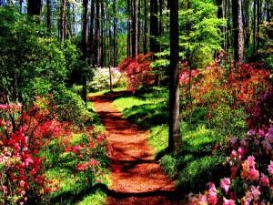 Bosque en primavera