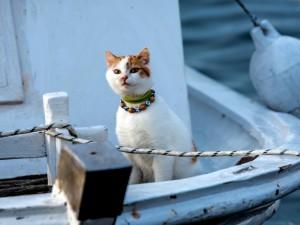 Gato observando con atención desde un barco