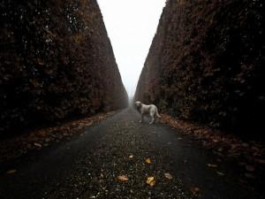 Perro en un camino con hojas otoñales