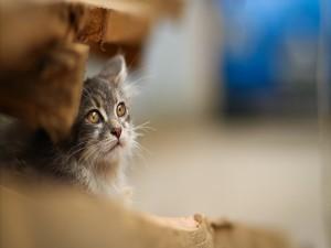 Gato escondido entre unas maderas