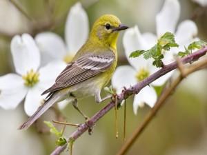 Postal: Pájaro en la rama de un árbol en flor