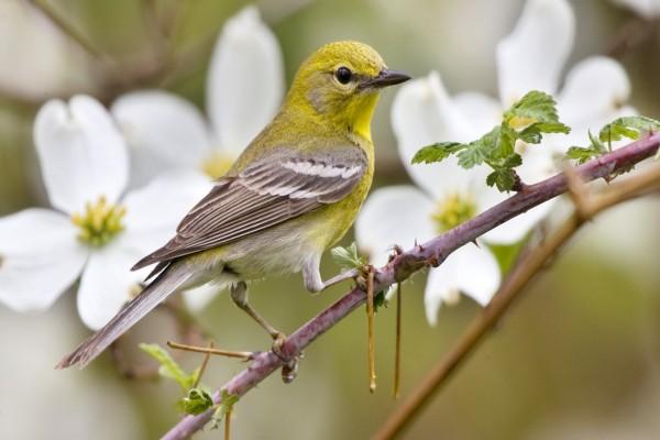 Pájaro en la rama de un árbol en flor