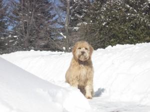 Postal: Un perro sobre la nieve