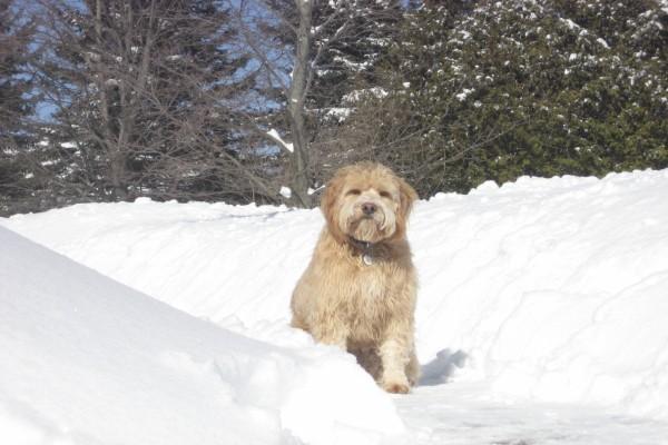 Un perro sobre la nieve