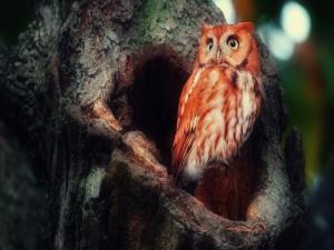 Hermoso búho en un árbol
