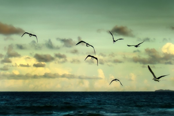 Aves volando sobre el mar