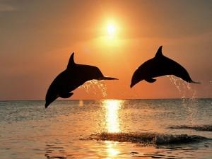 Delfines saltando al atardecer