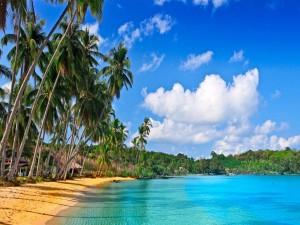 Playa cubierta de palmeras y vegetación
