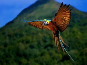 Postal: Un loro volando