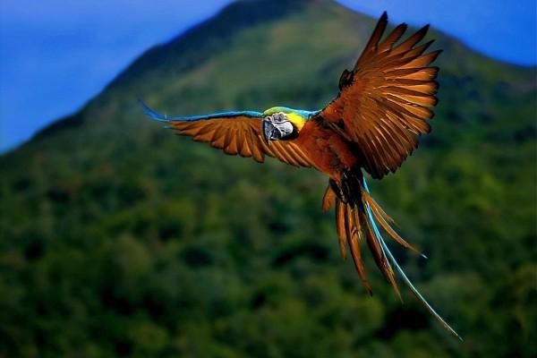 Un loro volando