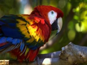 Postal: Loro con un bonito plumaje de colores