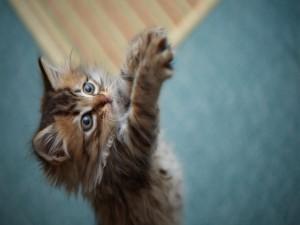 Gato pidiendo mimos