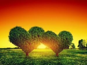 Árboles con forma de corazón