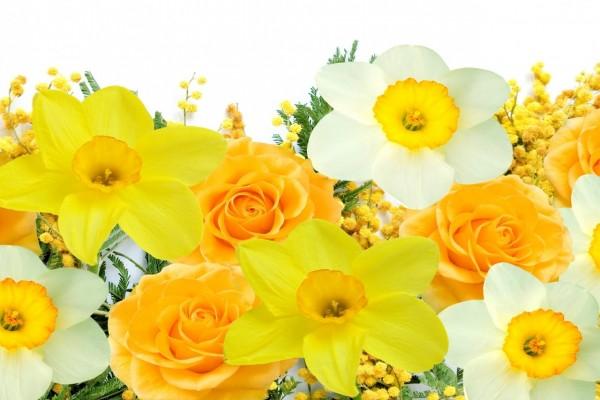 Delicados narcisos, mimosas y rosas