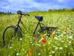 Bicicleta en un prado con flores de colores
